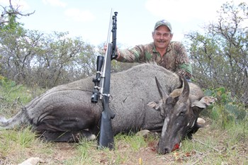 Texas Nilgai Hunts