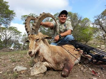 Nubian Ibex Bow Hunt