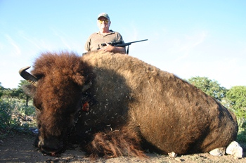 Meat Buffalo Hunt