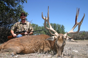 Gold Medal Red Stag Rifle Hunt
