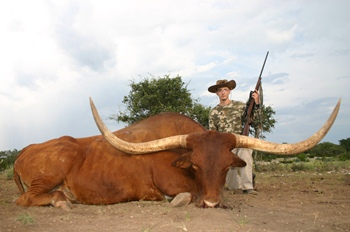 Texas Longhorn Hunt