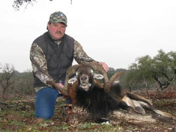 Texas Hybrid Mouflon Hunt