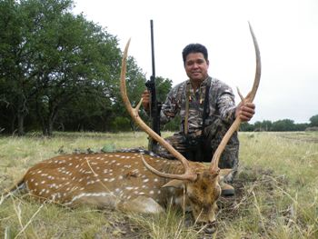 Trophy Axis Buck Hunt