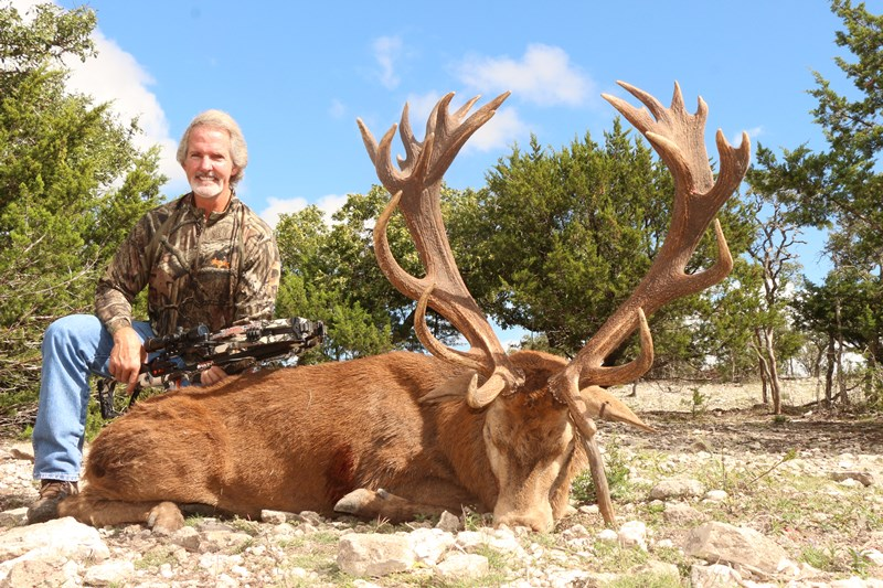 Texas Red Stag Hunt