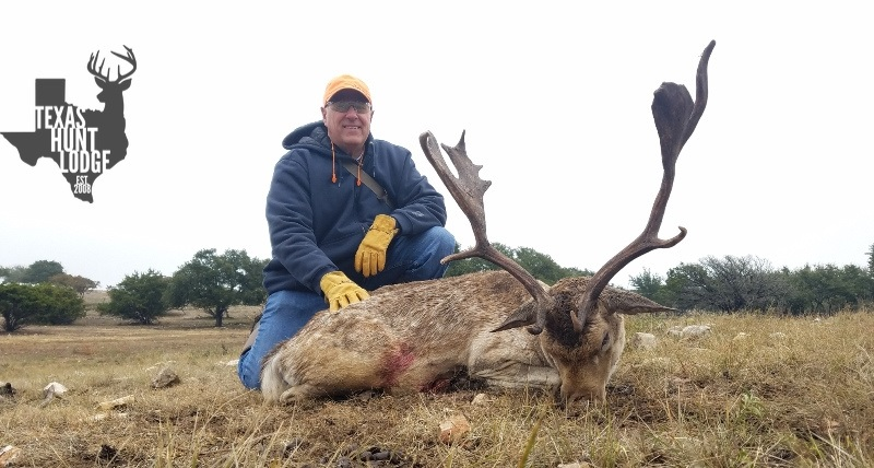 Trophy European Fallow Hunting