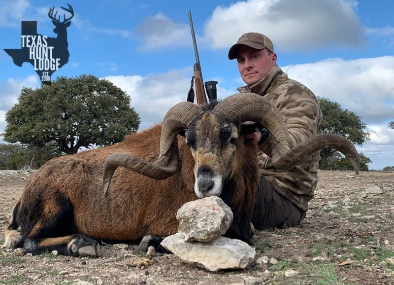 Corsican Sheep Hunting in Texas
