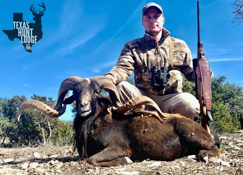 Black Hawaiian Sheep Hunting in Texas
