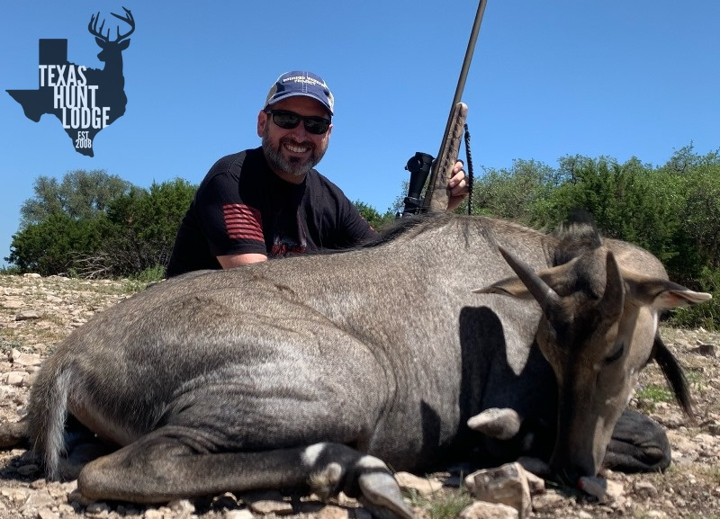 Nilgai Meat Hunt