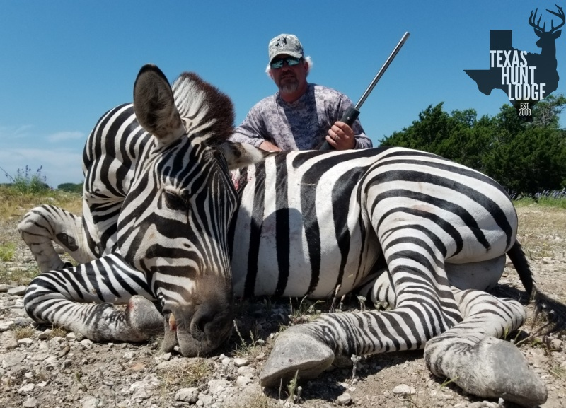 Zebra Hunts in Texas
