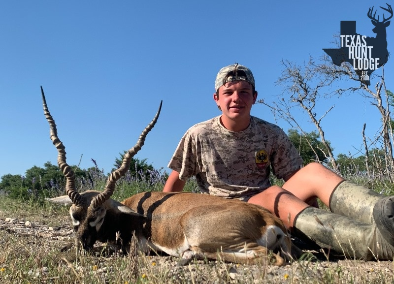 Blackbuck Hunts in Texsas