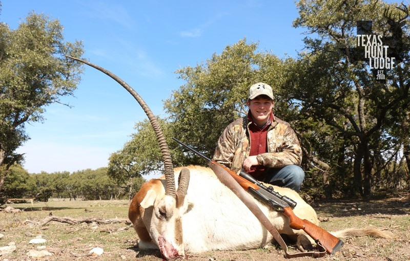 Scimitar Horned Oryx Hunts in Texas