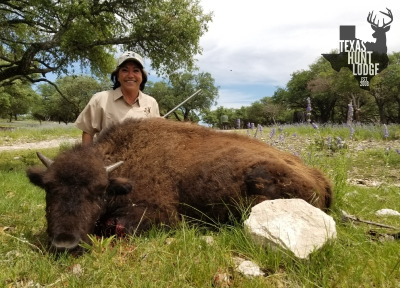 Meat Buffalo Hunting