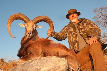Afghan Urial Trophy Hunt