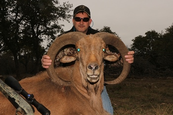 35 inch Aoudad Sheep Hunt