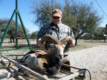 Armenian Mouflon Hunt