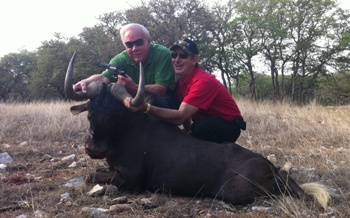 World Record Black Wildebeest