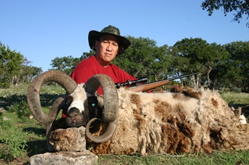 4 Horned Jacob Sheep Hunt