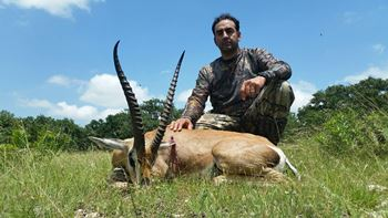 Grants gazelle Hunts
