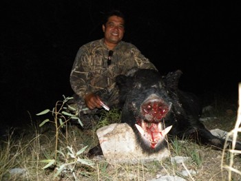 Texas Hog Dog Hunt