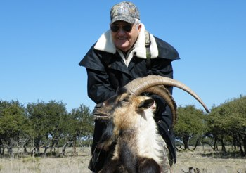 Persian Ibex Hunt