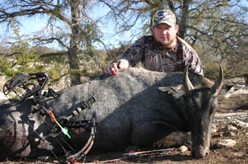 Archery Nilgai Hunt