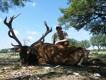 300 SCI Red Stag Hunt