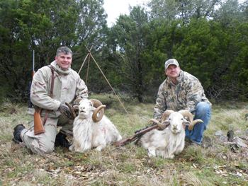 Texas Dall Hunts